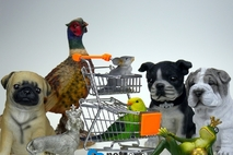 '강아지공장'에서 분양받은 품종견에 쏟아진 비판