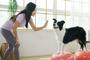반려동물 관절질환 걱정…'튼튼짐볼'로 예방하세요