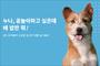 """""""속마음을 보여주개""""…CAMI 반려견 심리검사 눈길"""