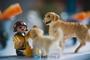 6월부터 서울반려동물교육센터 무료교육 시작