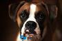주택총조사에 반려동물 포함…반려인가구 통계 정확해진다